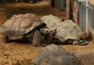 Reuzenschildpadverblijf geopend